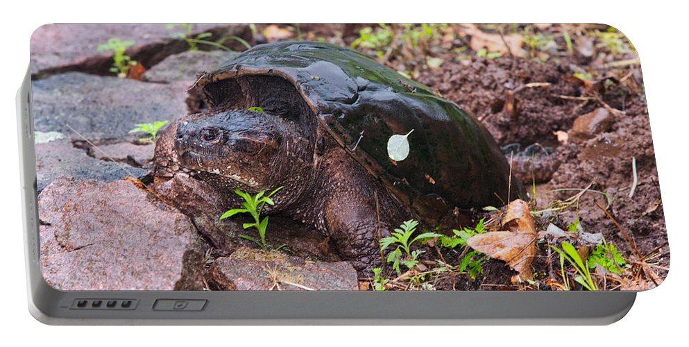 Animal Portable Battery Charger featuring the photograph Common Snapping Turtle by James Zipp