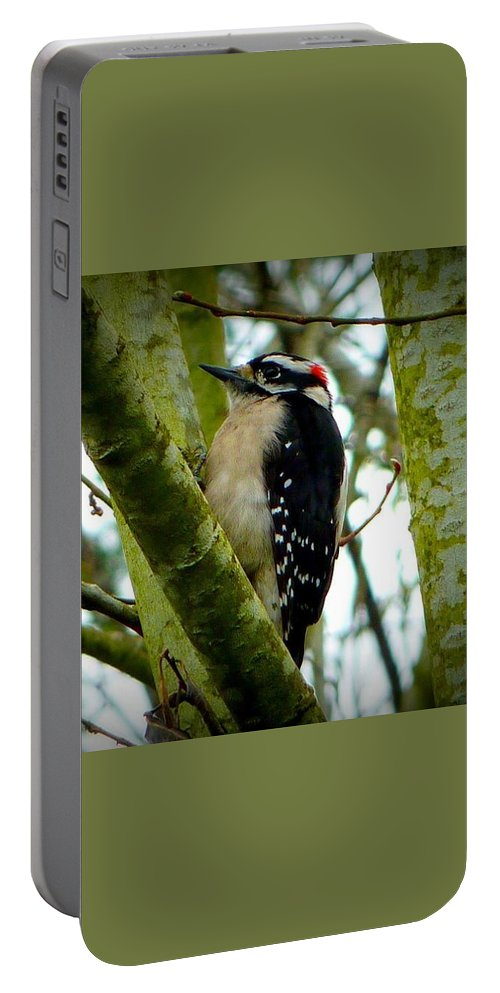 Hairy Woodpecker Portable Battery Charger featuring the photograph Don't Move Bird by Susan Garren