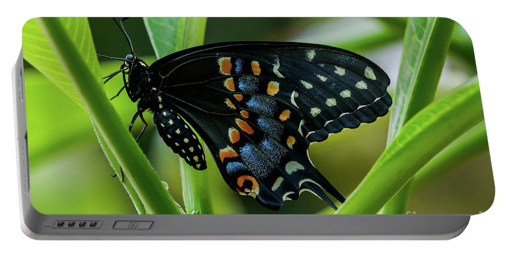 Butterfly Portable Battery Charger featuring the photograph Eastern Black Swallowtail - Closed Wings by Jo Ann Gregg