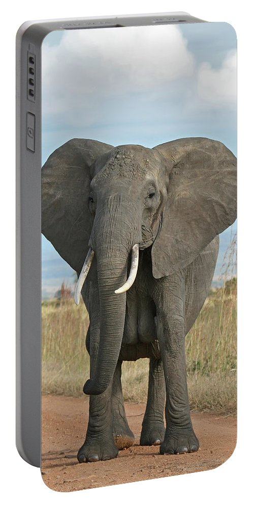 Portable Battery Charger featuring the photograph Ellie by Ellie
