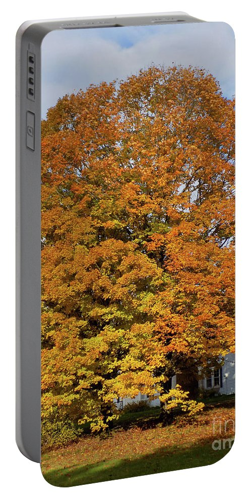 Maple Tree Portable Battery Charger featuring the photograph Full On Orange by William Tasker