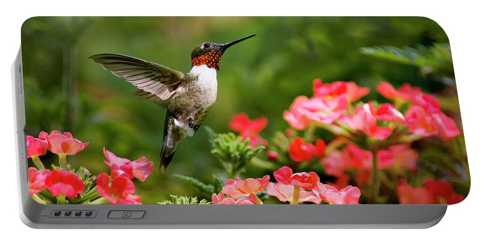 Hummingbird Portable Battery Charger featuring the photograph Graceful Garden Jewel by Christina Rollo