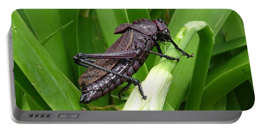 Portable Battery Charger featuring the photograph Grasshopper by Stanley Vreedeveld