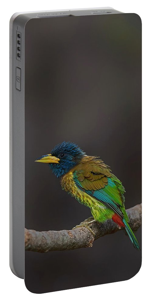 Bird Images For Print Portable Battery Charger featuring the photograph Great Barbet by Uma Ganesh