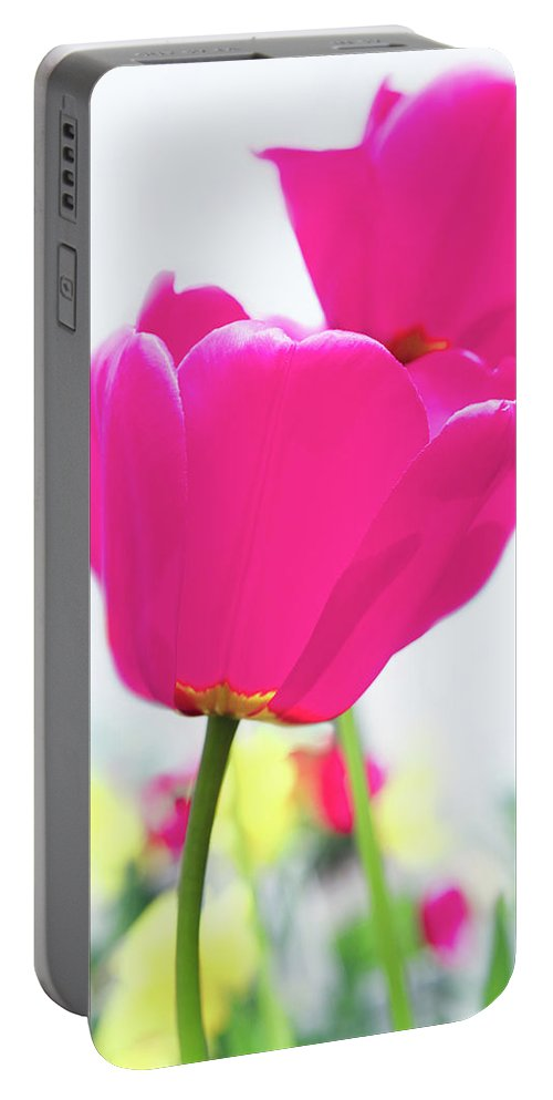 Hot Pink Portable Battery Charger featuring the photograph Hot Pink Prelude by Emily Johnson
