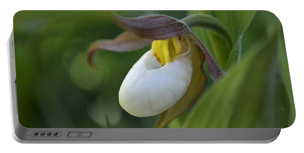 Flowers Portable Battery Charger featuring the photograph Lady's Slipper by Norman Burnham