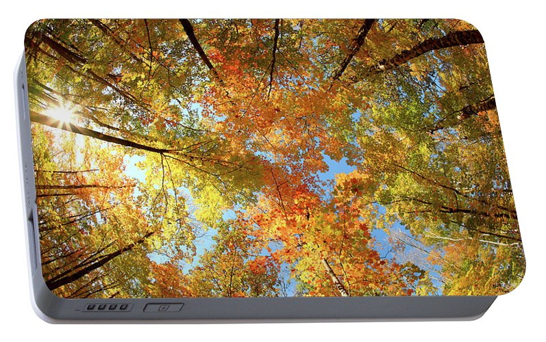 Canopy Portable Battery Charger featuring the photograph Langlade County Canopy by Todd Klassy