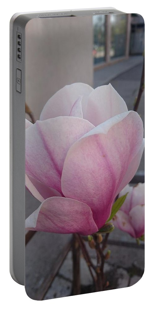Portable Battery Charger featuring the photograph Magnolia by Anzhelina Georgieva