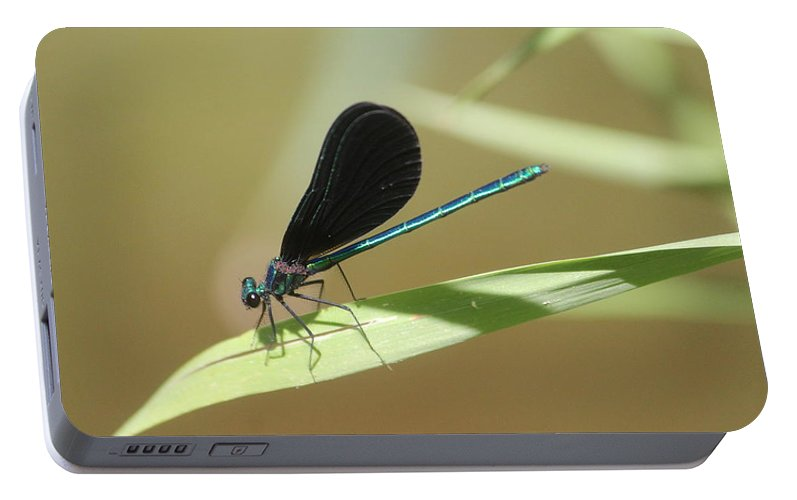 Ebony Jewelwing Portable Battery Charger featuring the photograph Male Ebony Jewelwing by Callen Harty