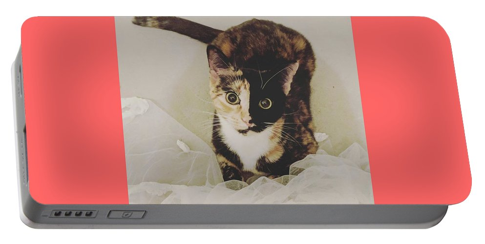 Cute Cat Portable Battery Charger featuring the photograph Meet Star by Star And Ray