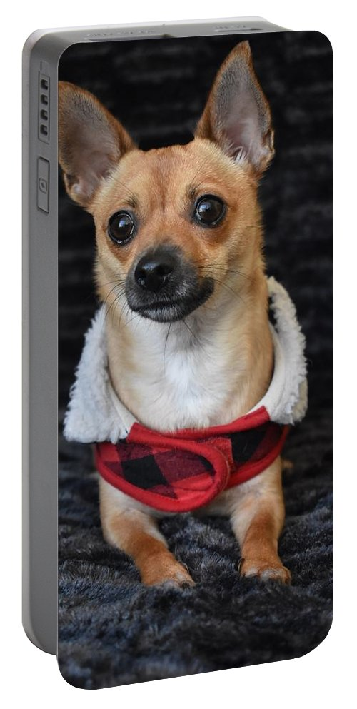 Chihuahua Portable Battery Charger featuring the digital art Miracle by Cassidy Marshall