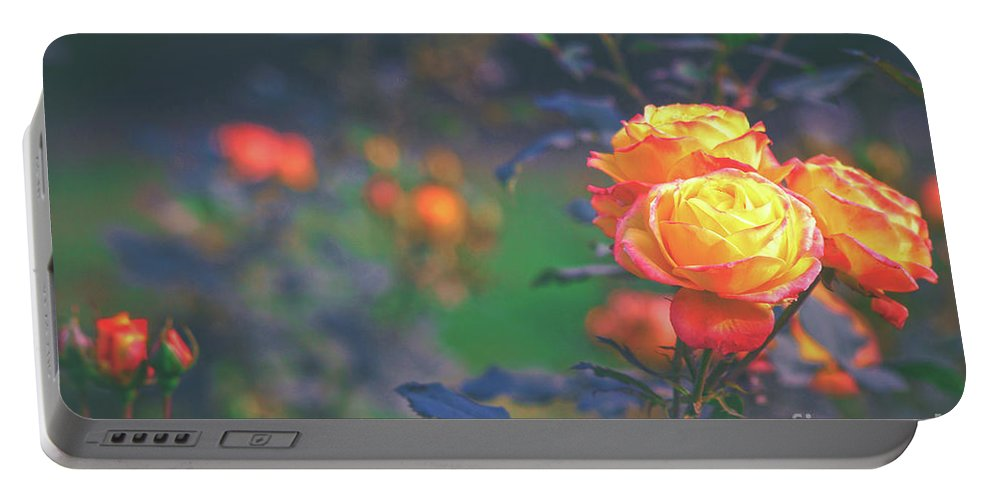 Yellow Roses Portable Battery Charger featuring the photograph Morning Bloom by Neha Gupta