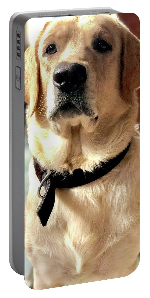 Labrador Dog Portable Battery Charger featuring the photograph Labrador Dog by Arun Jain