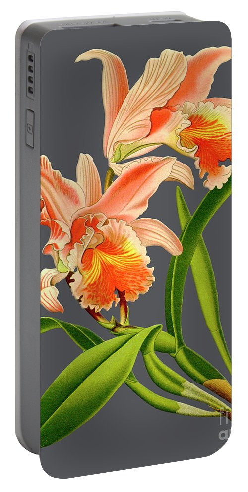 Vintage Portable Battery Charger featuring the digital art Orchid Old Print by Baptiste Posters