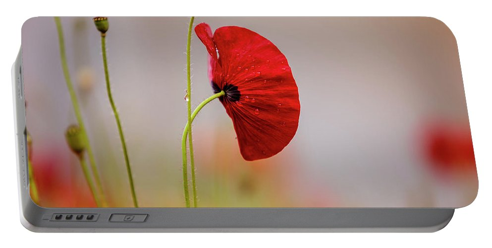 Poppy Portable Battery Charger featuring the photograph Red Corn Poppy Flowers by Nailia Schwarz