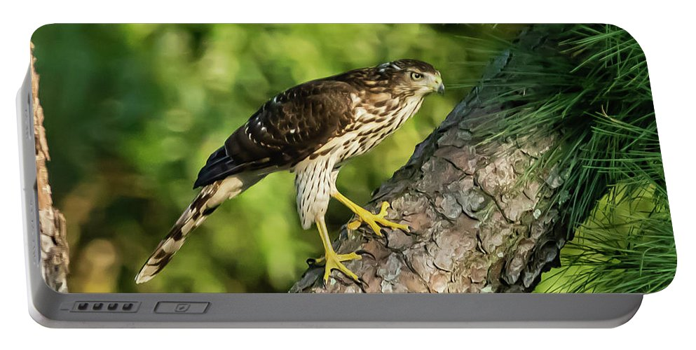 Bird Portable Battery Charger featuring the digital art Red Shouldered Hawk Looking For Prey by Ed Stines