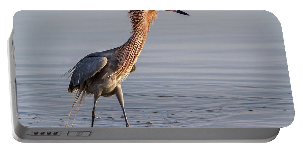 American Fauna Portable Battery Charger featuring the photograph Reddish Egret In Breeding Plumage by Ivan Kuzmin