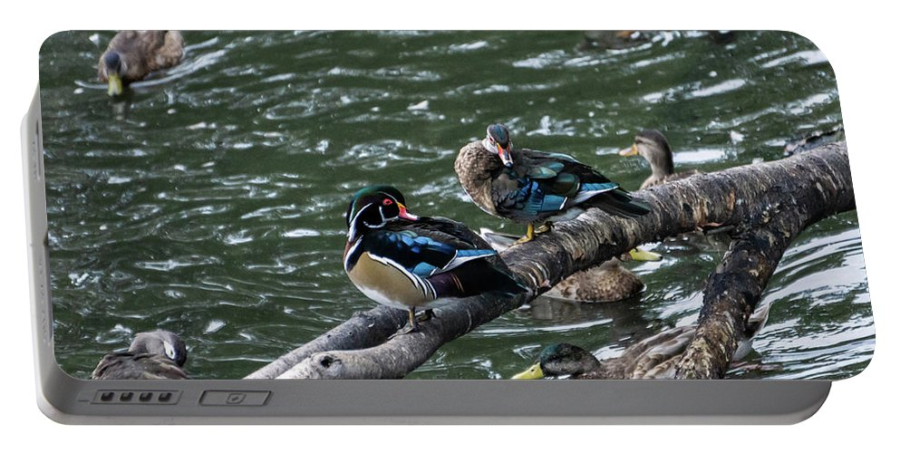 Duck Portable Battery Charger featuring the photograph Resting Ducks by Rob Olivo