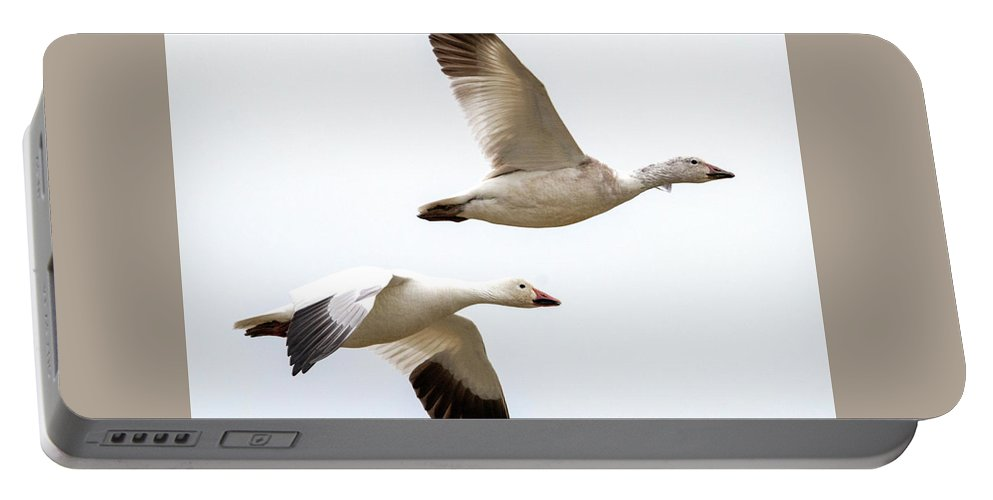 Snow Geese Portable Battery Charger featuring the photograph Tandem Flight by Mike Dawson