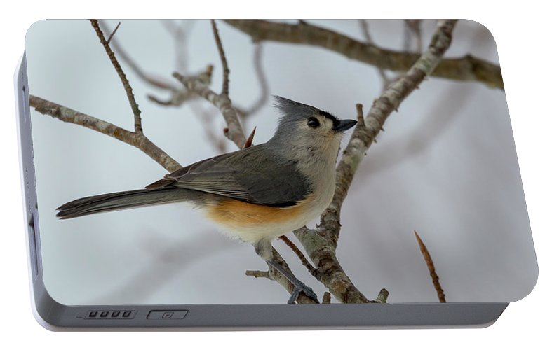 Titmouse Portable Battery Charger featuring the photograph Titmouse Winter Morning Cutie by Betsy Knapp