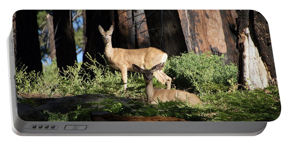 Deer Portable Battery Charger featuring the photograph Two Deer by Carly Creley