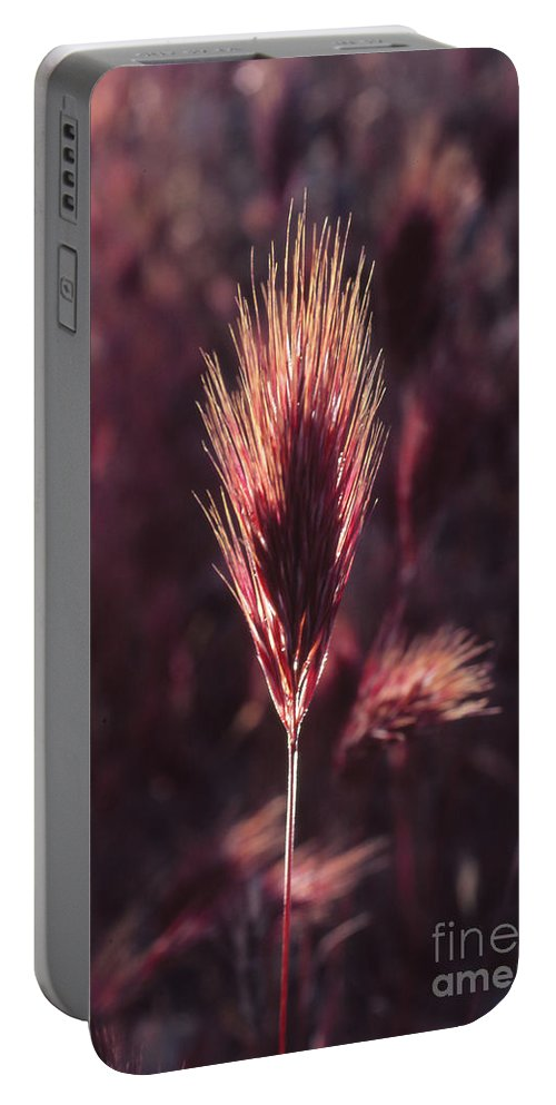 Portable Battery Charger featuring the photograph Untitled by Randy Oberg