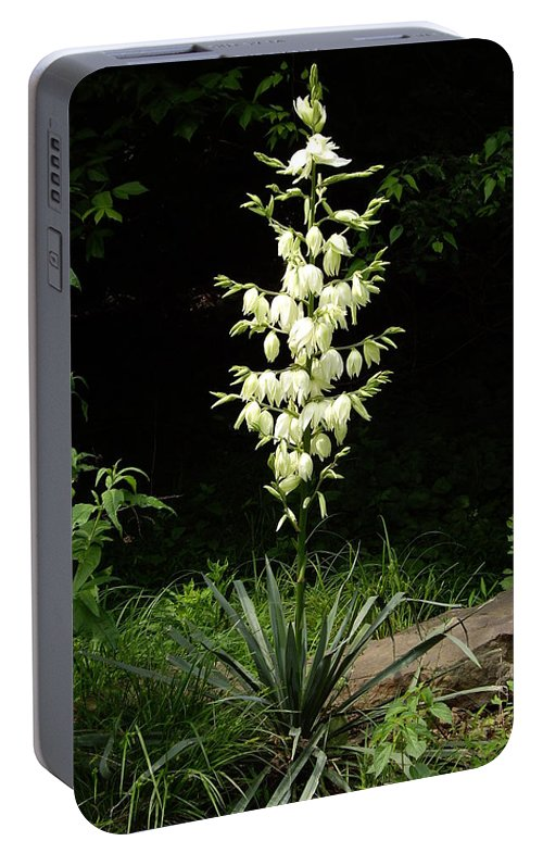 Yucca Portable Battery Charger featuring the photograph Yucca Blossoms by Nancy Ayanna Wyatt
