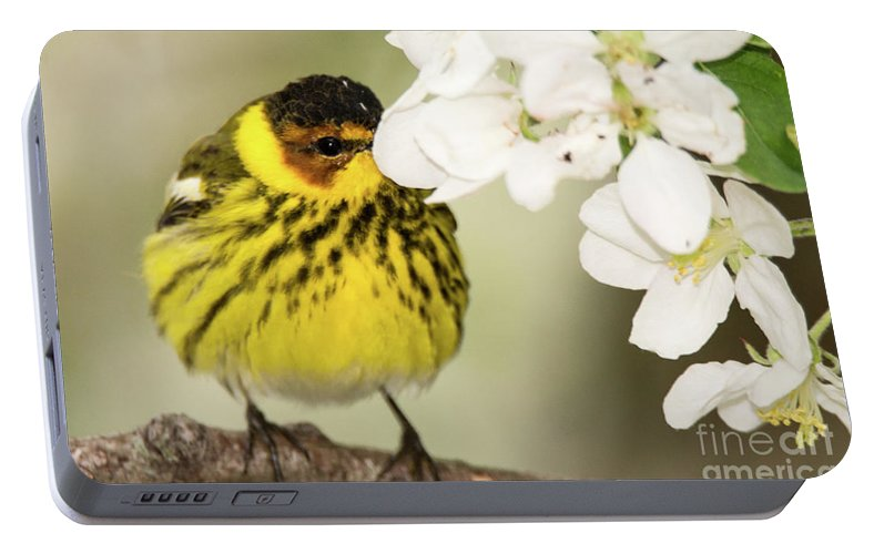 Warbler Portable Battery Charger featuring the photograph I See You by Gaby Swanson