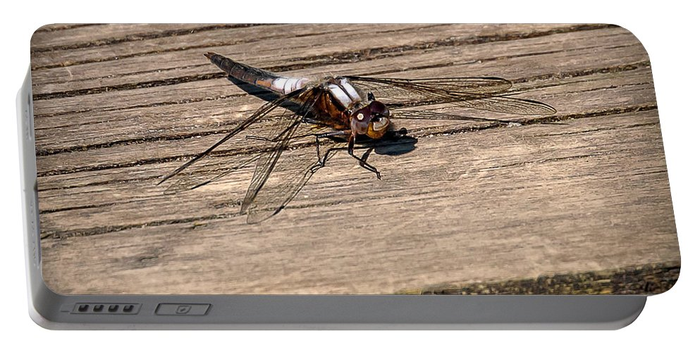 Insects Portable Battery Charger featuring the photograph 20-0609-0227 by Anthony Roma