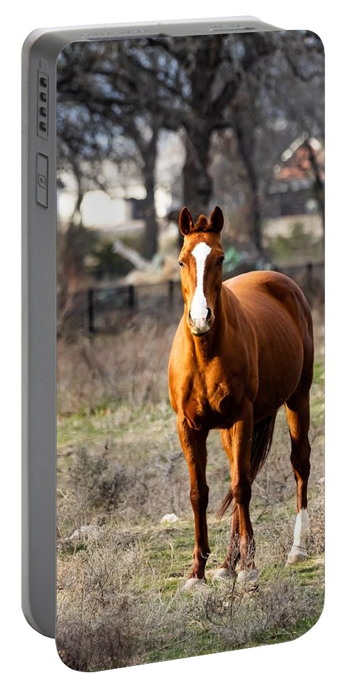 Horse Portable Battery Charger featuring the photograph Bay Horse 3 by C Winslow Shafer