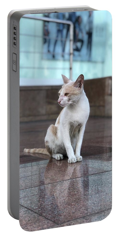 Wallpaper Portable Battery Charger featuring the photograph Cat Sitting On Marble Floor by Prashant Dalal