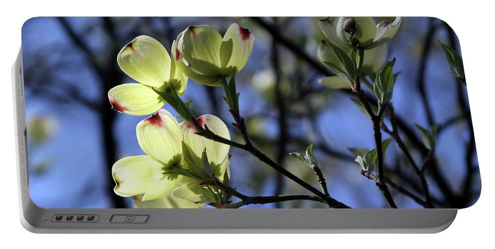 Dogwood Tree Portable Battery Charger featuring the photograph Dogwood in Sunlight by John Lautermilch