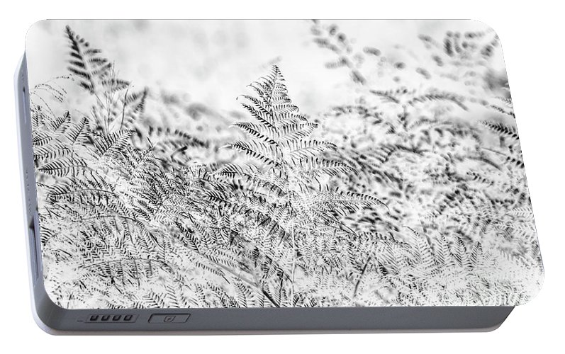 Forest Portable Battery Charger featuring the photograph Ferny Grove by Jorgo Photography - Wall Art Gallery
