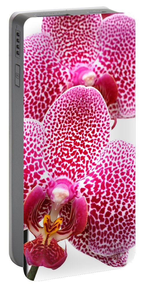 Bloom Portable Battery Charger featuring the photograph Phalaenopsis orchid by Gaspar Avila