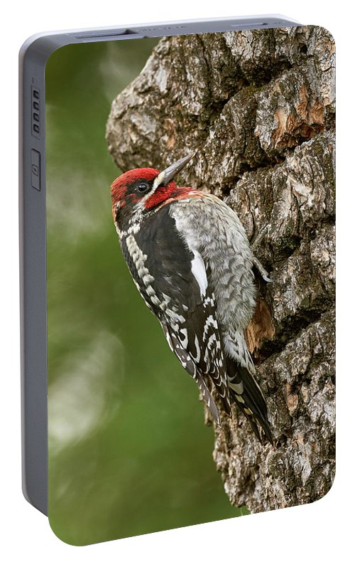 Birds Portable Battery Charger featuring the photograph Red-breasted Sapsucker, Sacramento County California by Doug Herr