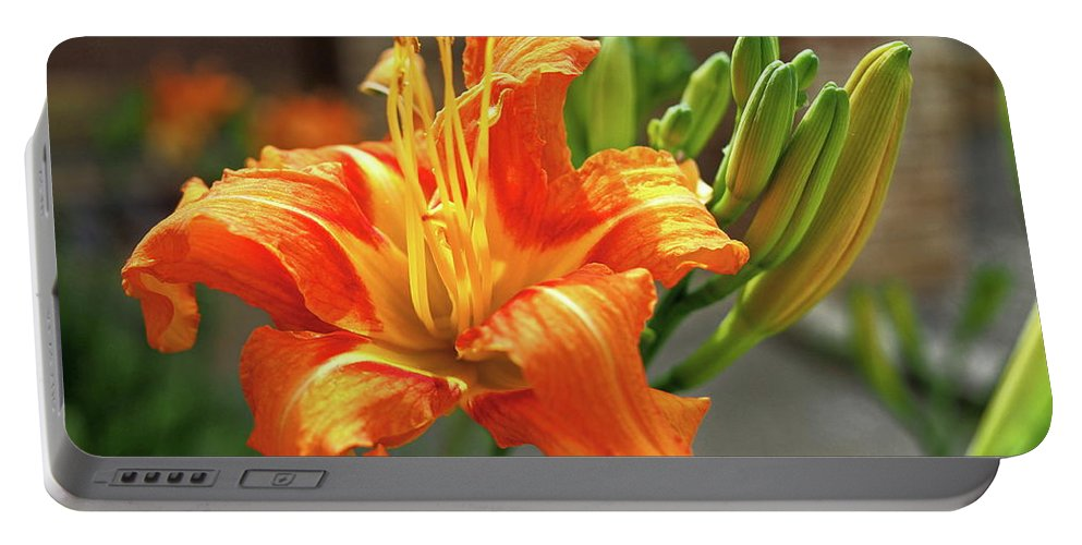 Orange Portable Battery Charger featuring the photograph Spring Flower 14 by C Winslow Shafer