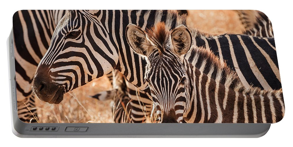 3scape Portable Battery Charger featuring the photograph Zebras by Adam Romanowicz