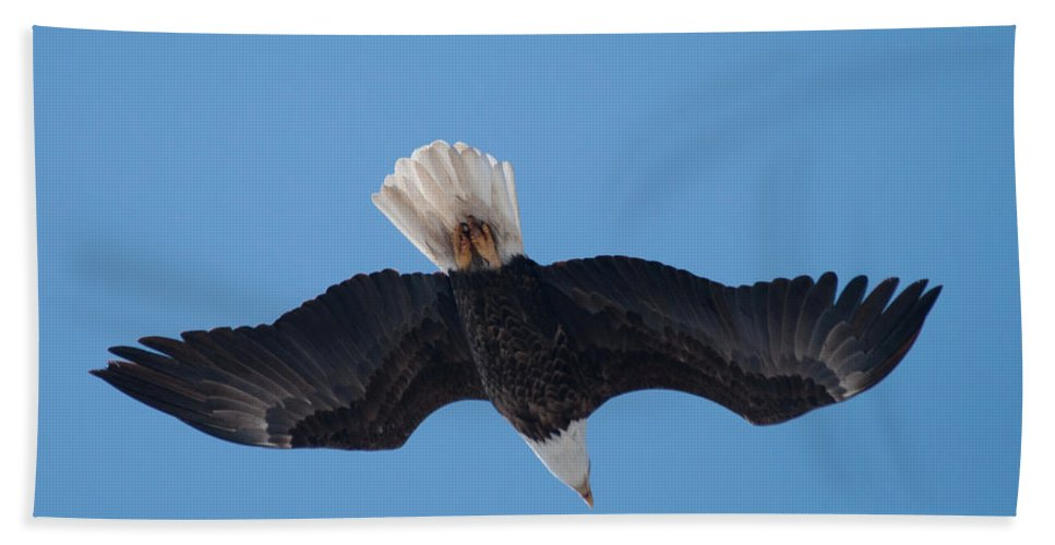 Bald Eagle Beach Towel featuring the photograph Bald Eagle In Flight 8 by Ronald Grogan