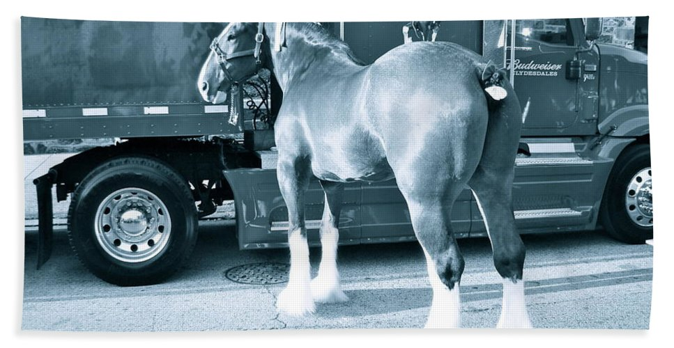 Draft Horse Beach Towel featuring the photograph Clydesdale In Black And White by Alice Gipson