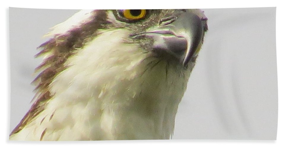 Osprey Beach Towel featuring the photograph Eye Of The Osprey by Zina Stromberg