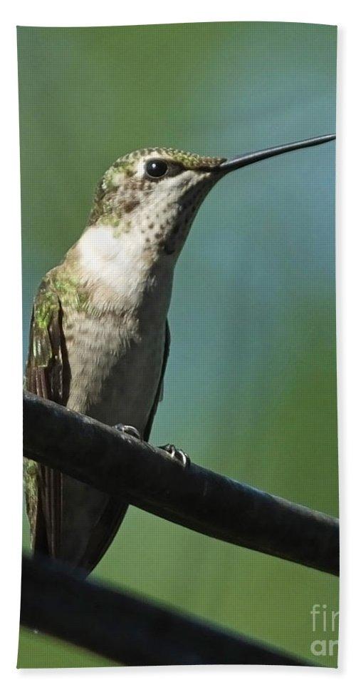 Hummingbird Beach Towel featuring the photograph Girl On A Wire by Lizi Beard-Ward