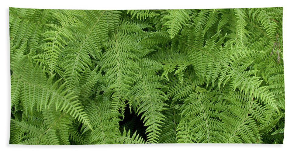 Botanical Beach Towel featuring the photograph Mountain Ferns Of North Carolina by John Harmon