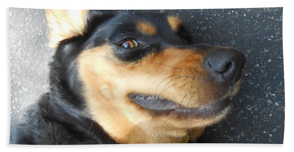 Dogs Beach Towel featuring the photograph Silly Dawg by Jane Harris
