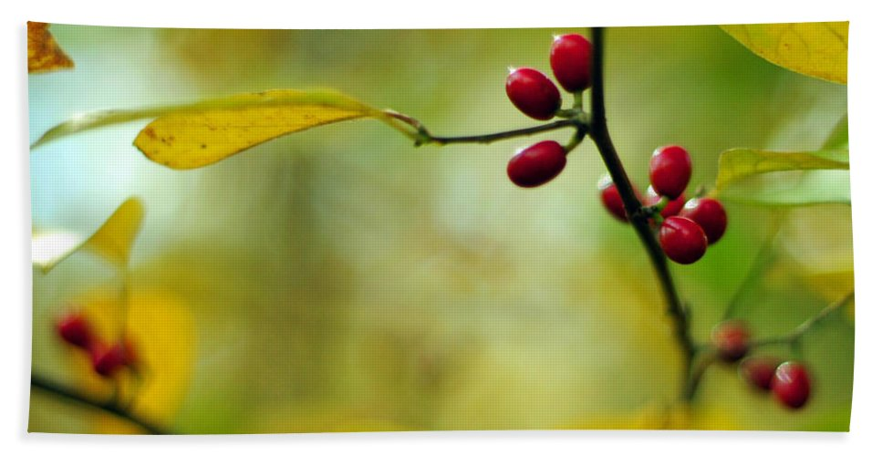Lindera Benzoin Beach Towel featuring the photograph Spicebush With Red Berries by Rebecca Sherman