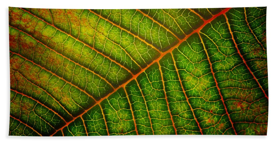Leaf Beach Towel featuring the photograph The Underside by David and Carol Kelly