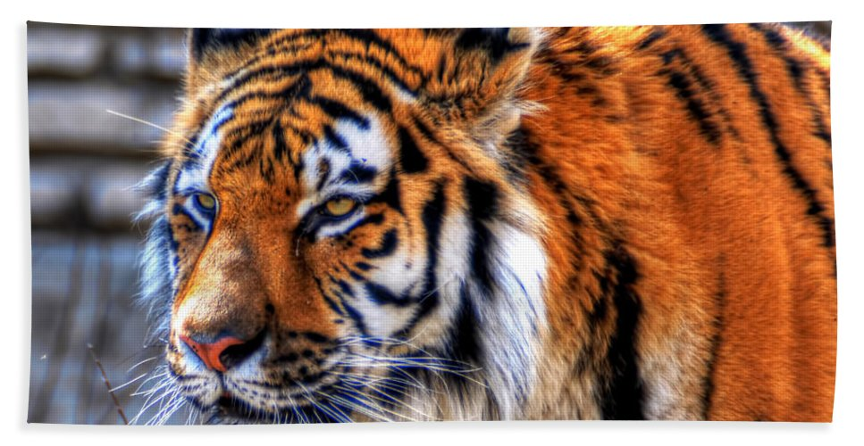 Animals Beach Towel featuring the photograph 0011 Siberian Tiger by Michael Frank Jr