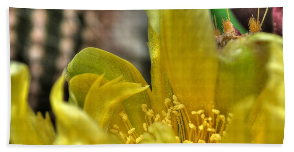 Buffalo Botanical Gardens Beach Towel featuring the photograph 003 For The Cactus Lover In You Buffalo Botanical Gardens Series by Michael Frank Jr