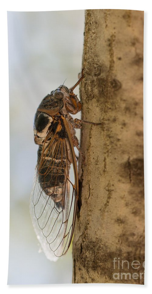 Cicadetta Montana Beach Towel featuring the photograph 02 New Forest Cicada by Jivko Nakev