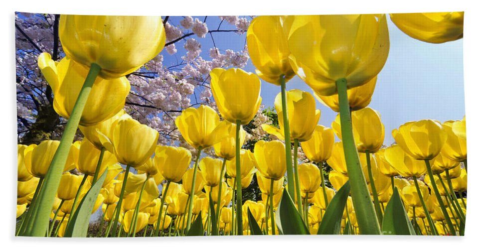 Colourful Beach Towel featuring the photograph 090416p030 by Arterra Picture Library