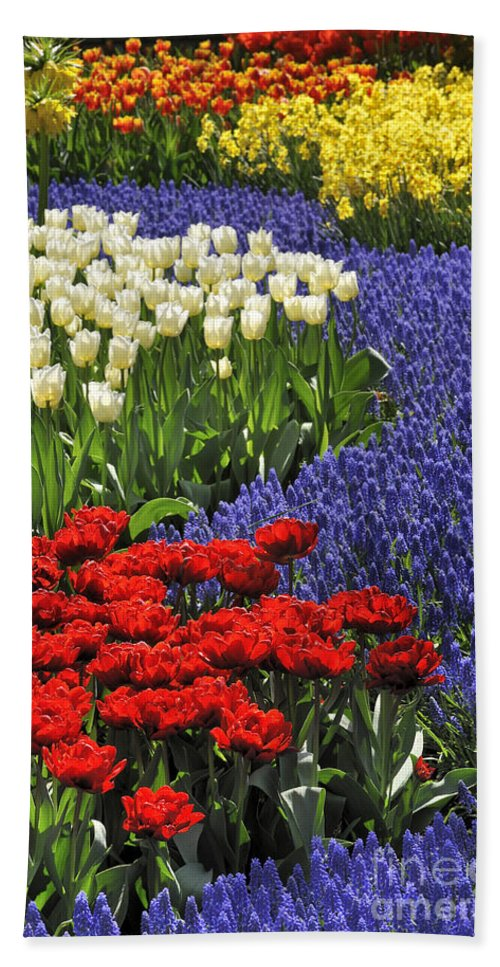 Colourful Beach Towel featuring the photograph 090811p122 by Arterra Picture Library